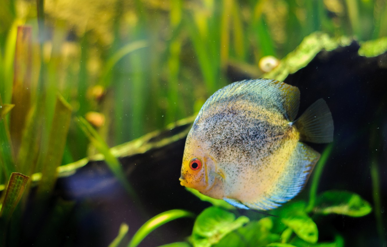 Photo wallpaper greens, grass, eyes, water, background, color, aquarium, fish, mouth, spot, tail, fins