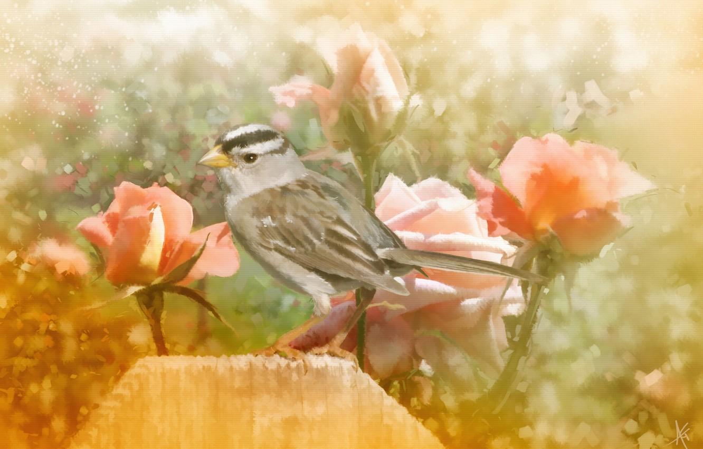 Photo wallpaper flowers, bird, roses, texture