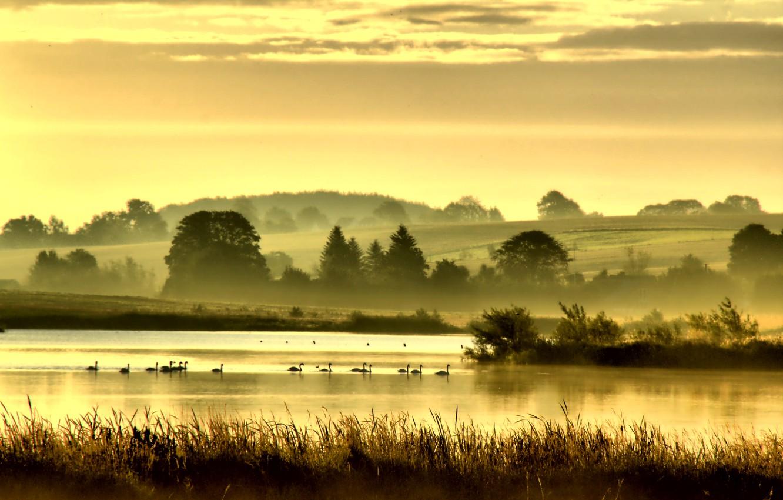 Photo wallpaper trees, birds, fog, lake, river, hills