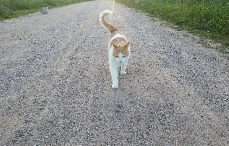 Photo wallpaper road, grass, nature, animal, Cat, gravel, kitty, pet