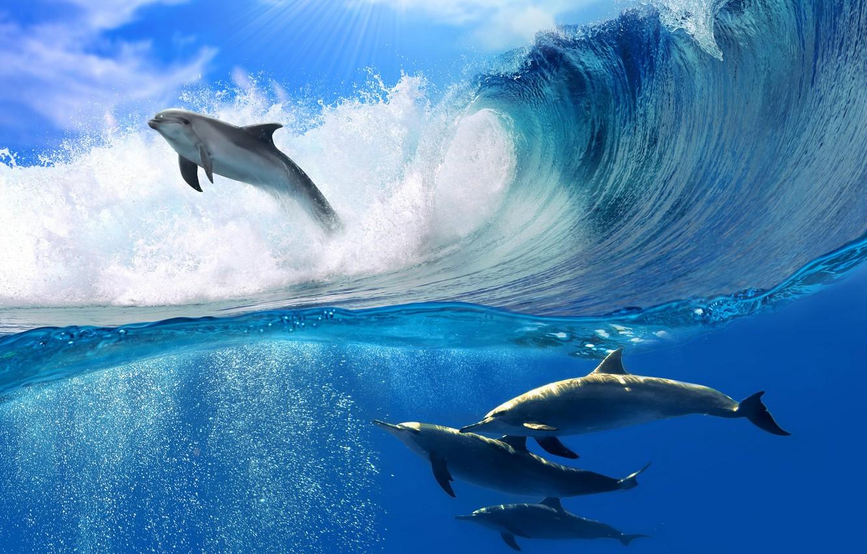 Photo wallpaper sea, foam, the sun, wave, dolphins