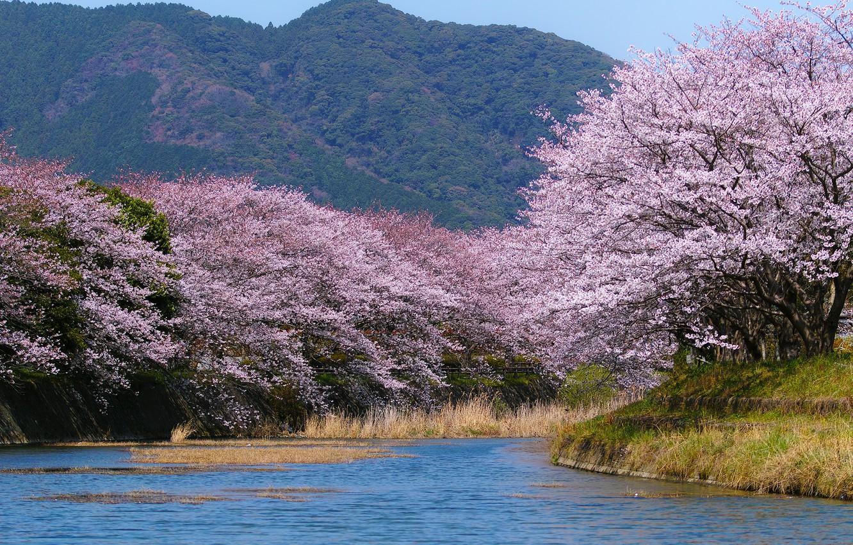 Photo wallpaper river, mountain, spring, Japan, garden, Sakura, flowering