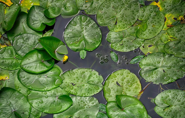 Photo wallpaper river, water lilies, Croatia, To the Koran, Rainy day