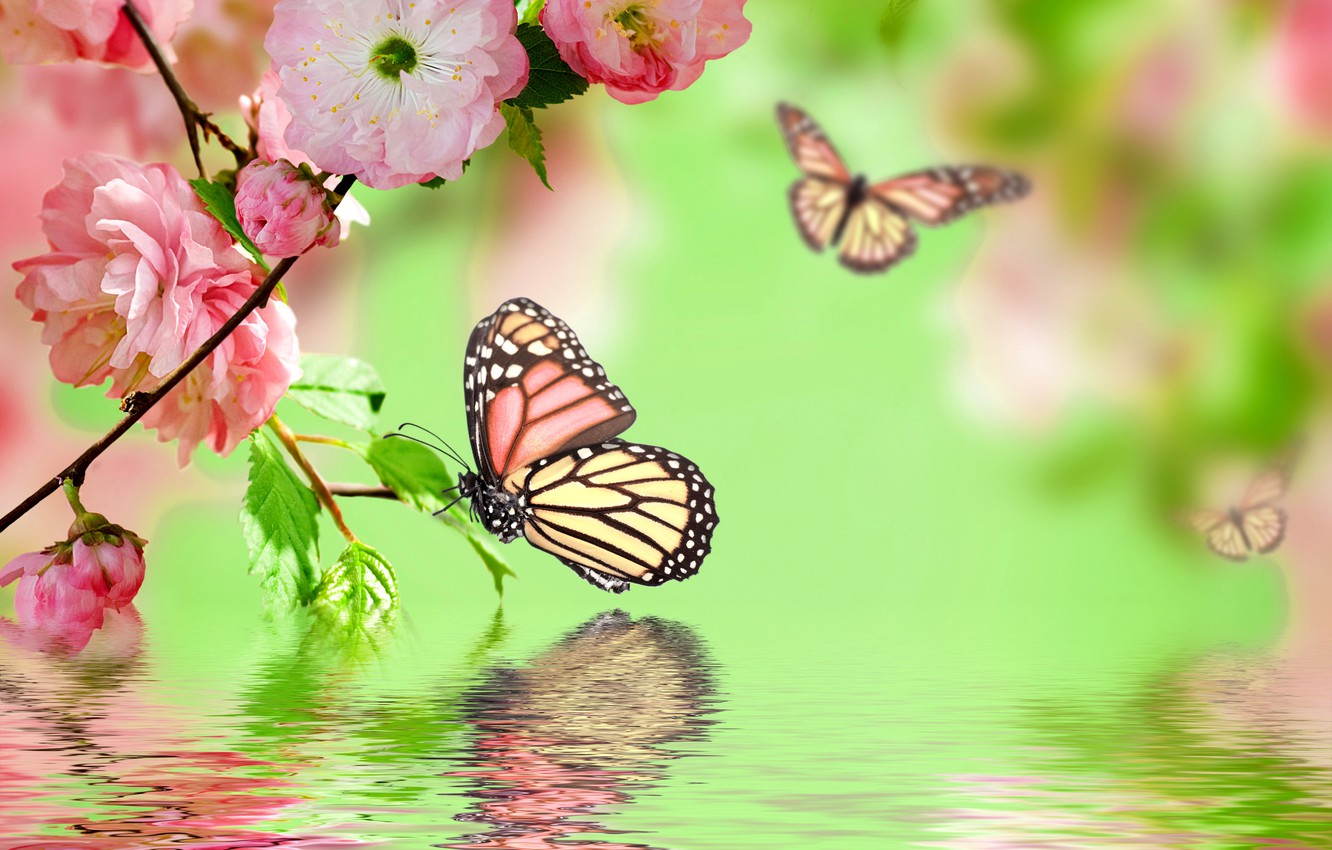Wallpaper Flowers Spring Reflection Butterflies Flowering