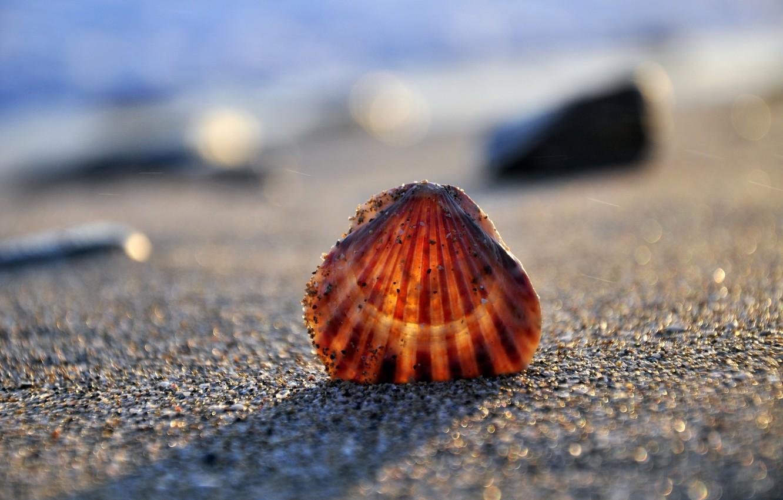 Photo wallpaper sand, sea, shore, shell