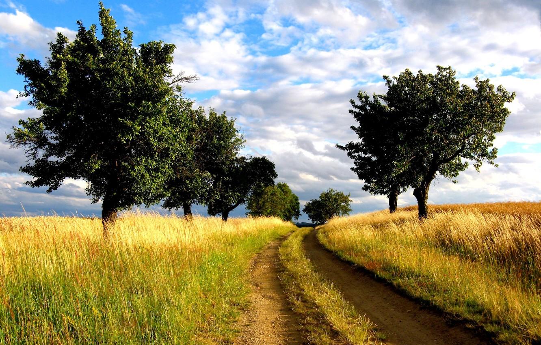Photo wallpaper road, field, trees