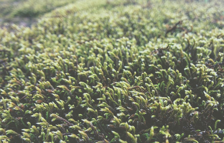 Photo wallpaper grass, macro, green, green, moss, grass, moss macro