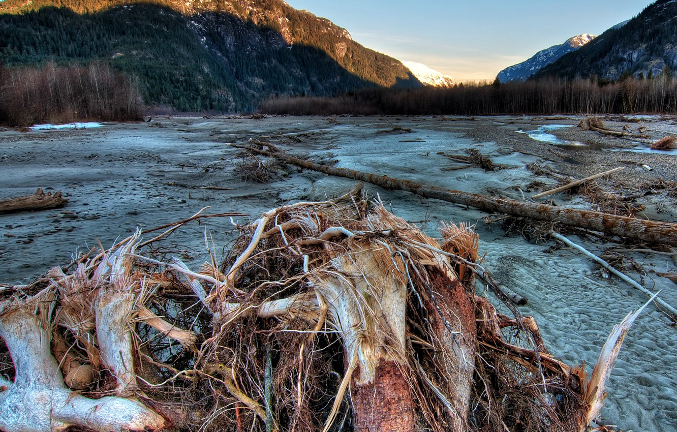 Photo wallpaper sand, forest, trees, mountains, Canada, driftwood, Squamish