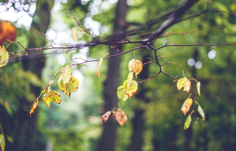 Photo wallpaper autumn, leaves, tree, mood, web, branch, blur, bokeh