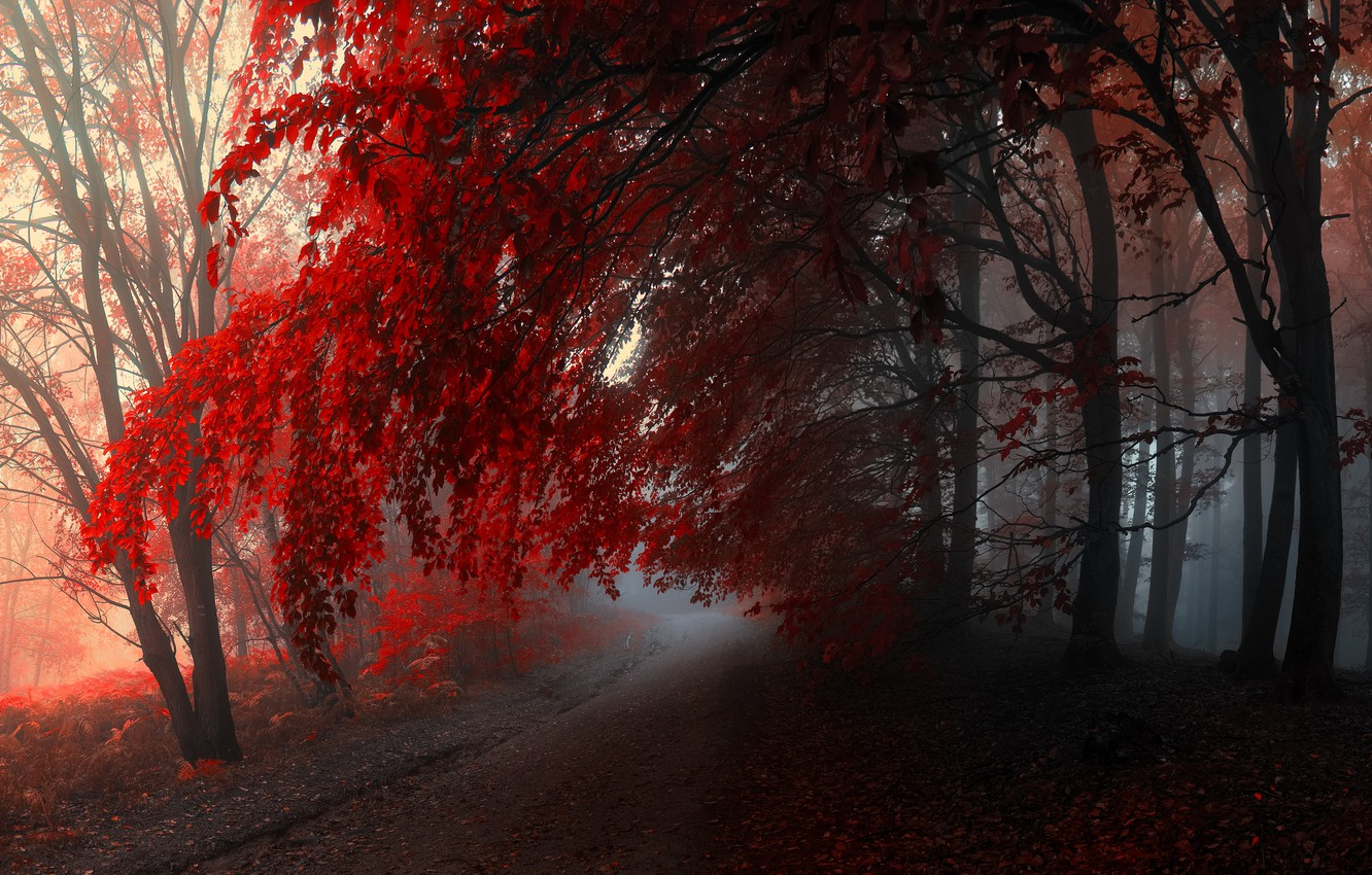 Photo wallpaper autumn, forest, trees, fog, forest, path, Autumn
