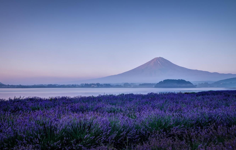 Photo wallpaper field, flowers, nature, lake, mountain, morning, the volcano, Japan, Fuji, lavender, Fuji