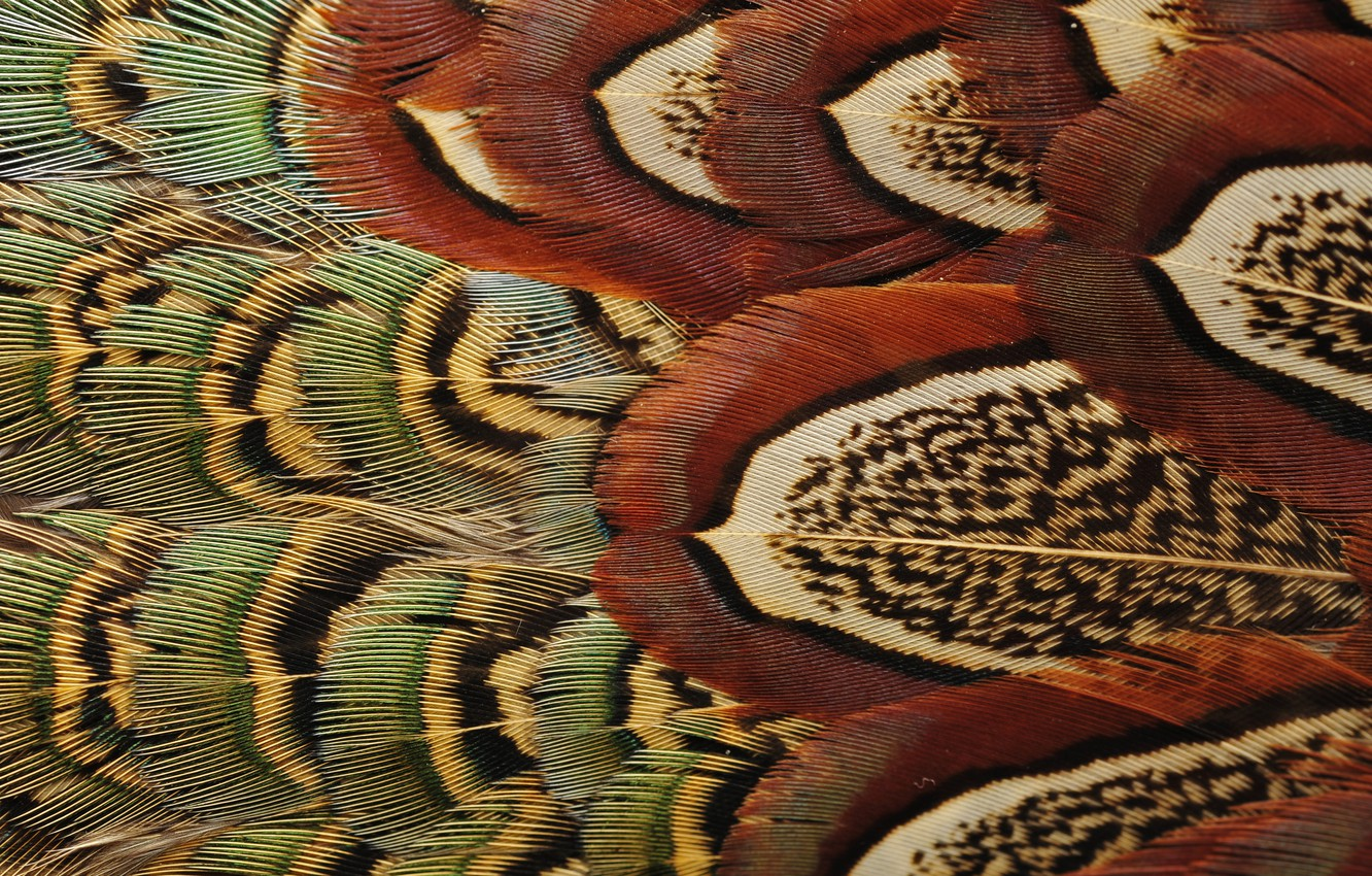 Photo wallpaper bird, feathers, color