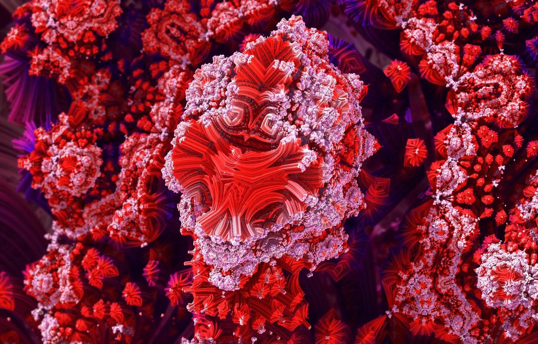 Photo wallpaper color, structure, corals, the volume