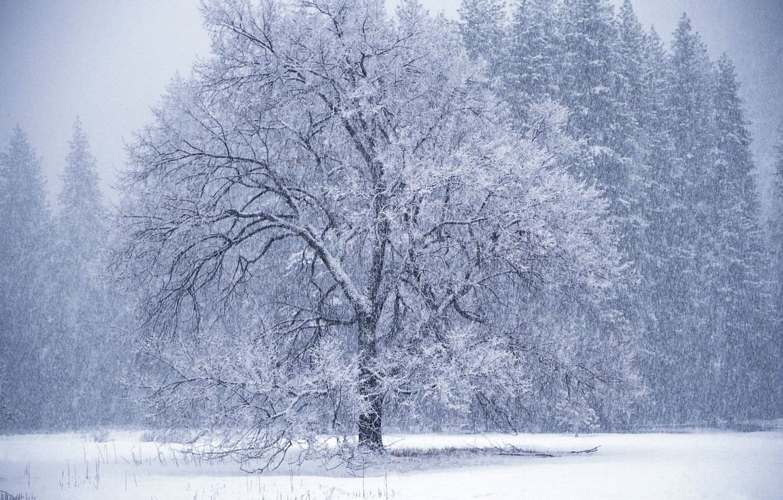 Photo wallpaper winter, tree, Blizzard