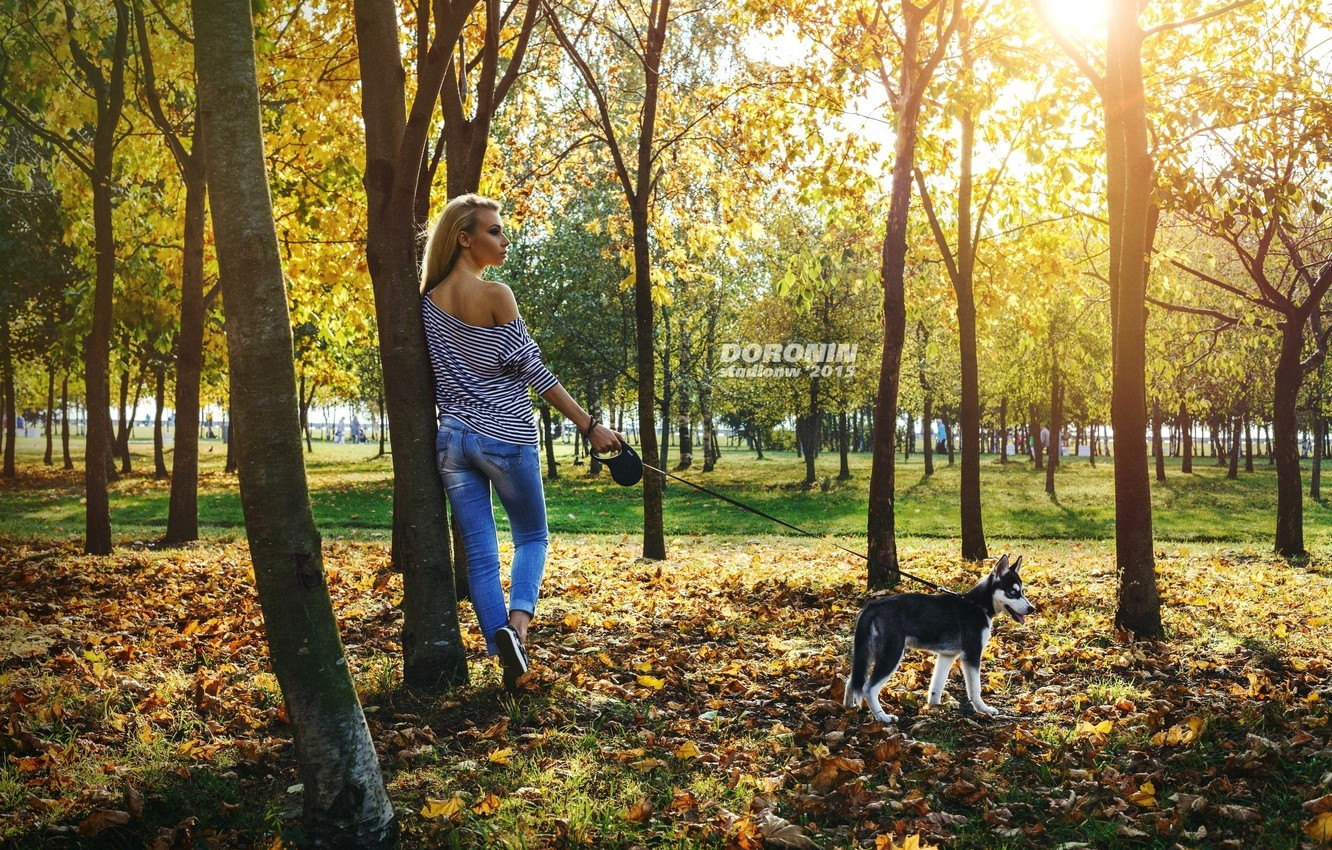 Photo wallpaper autumn, leaves, girl, the sun, trees, Park, jeans, Mike, figure, hairstyle, blonde, leash, husky, photographer, …
