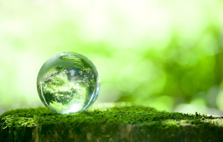 Photo wallpaper greens, reflection, moss, ball, bokeh