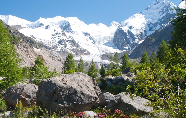 Photo wallpaper grass, snow, flowers, mountains, stones, tops