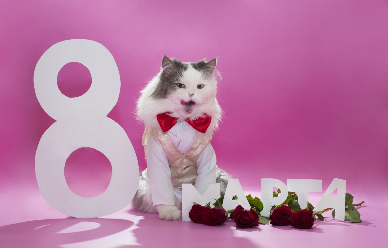 Photo wallpaper cat, flowers, butterfly, roses, fluffy, March 8, vest