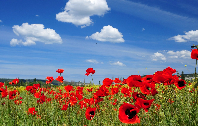 Photo wallpaper the sky, clouds, flowers, Maki, meadow