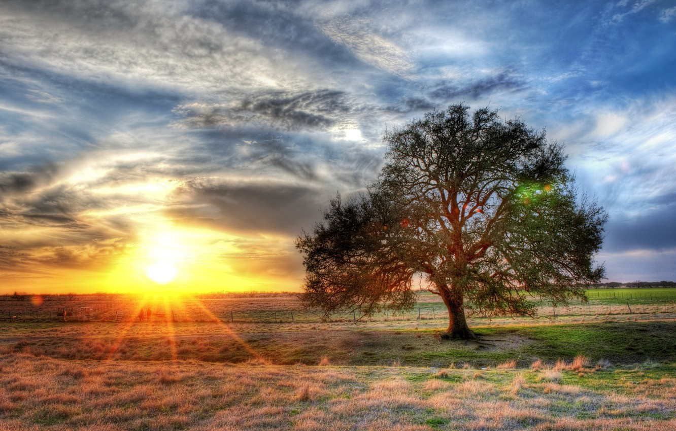 Photo wallpaper the sky, the sun, clouds, sunset, nature, photo, tree, dawn, HDR, rays of light