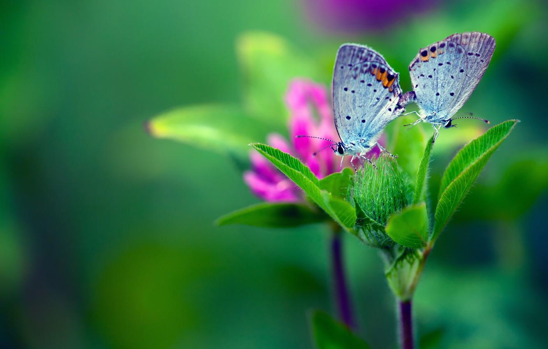 Photo wallpaper flower, macro, butterfly, green, leaves background