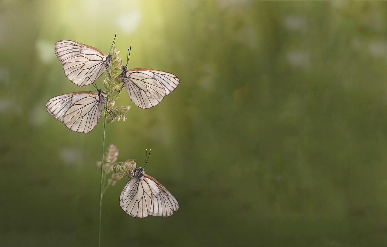 Photo wallpaper summer, butterfly, morning