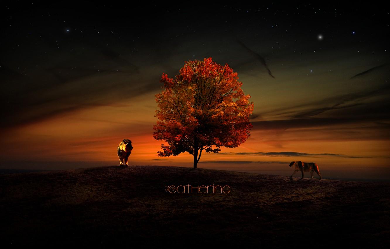 Photo wallpaper the sky, sunset, tree, stars, Leo, lions, lioness, Gathering