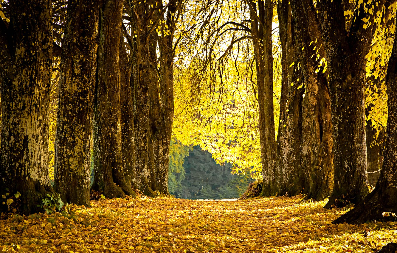 Photo wallpaper autumn, leaves, Park, yellow, alley, fallen