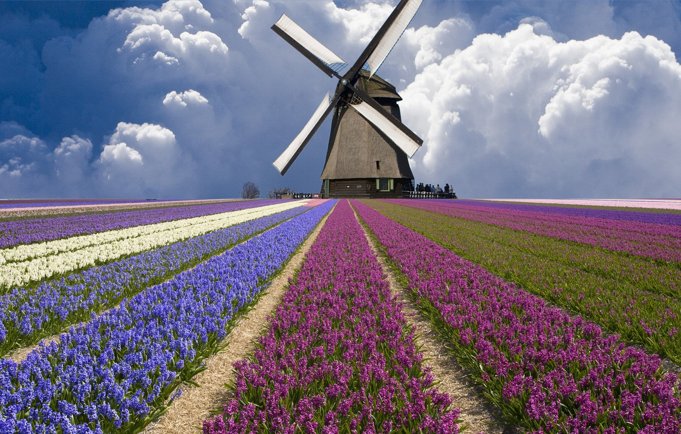 Photo wallpaper field, clouds, mill, tulips, Netherlands