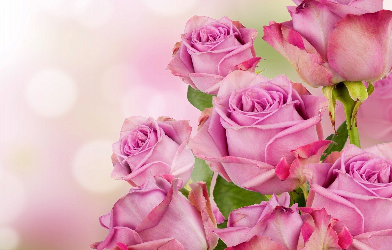 Photo wallpaper roses, pink, blossom, flowers, beautiful, roses