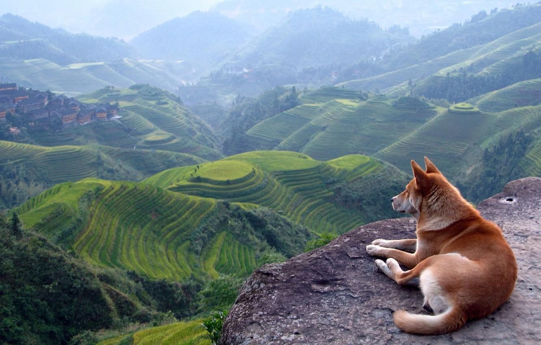 Photo wallpaper landscape, mountains, view, dog