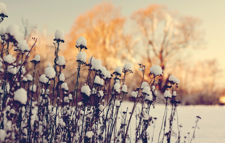Photo wallpaper winter, macro, snow, deadwood