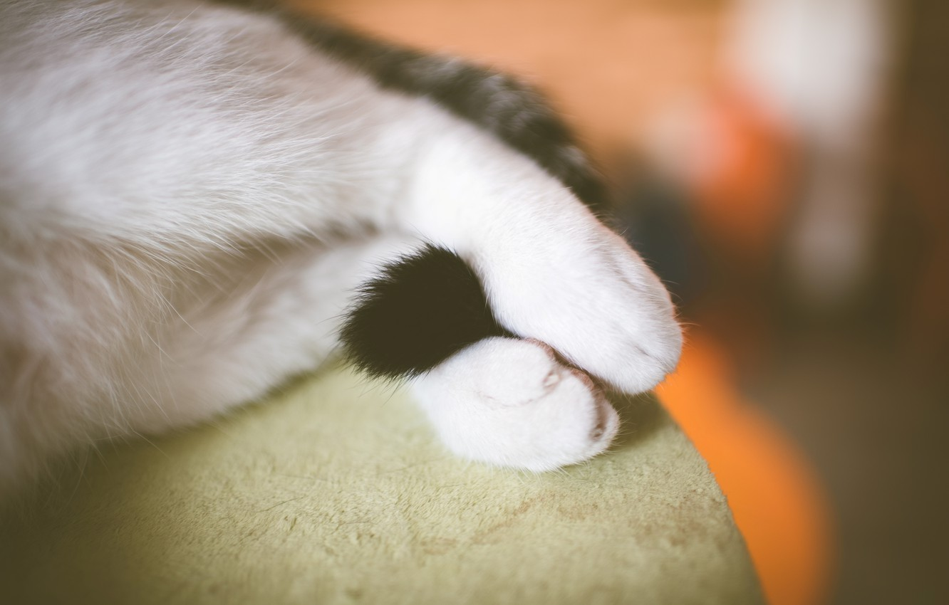 Photo wallpaper legs, paws, tail, white, cat
