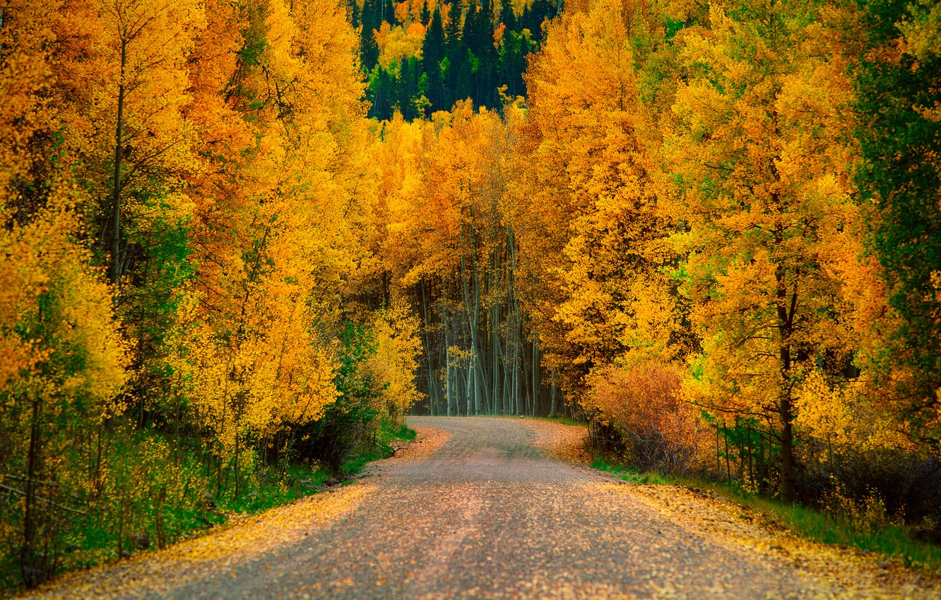 Photo wallpaper road, autumn, forest, trees, nature