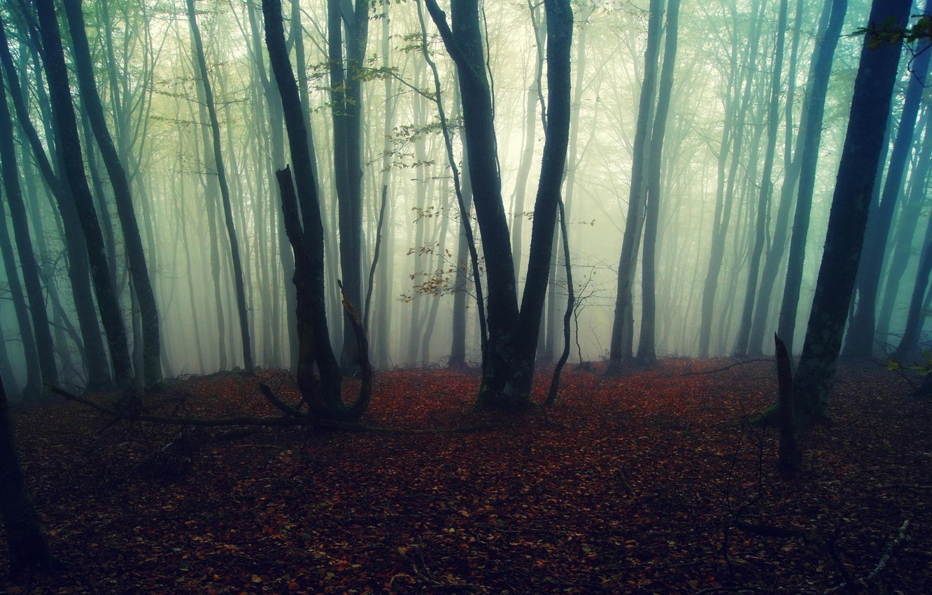 Photo wallpaper autumn, forest, leaves, trees, nature, fog, background, Wallpaper