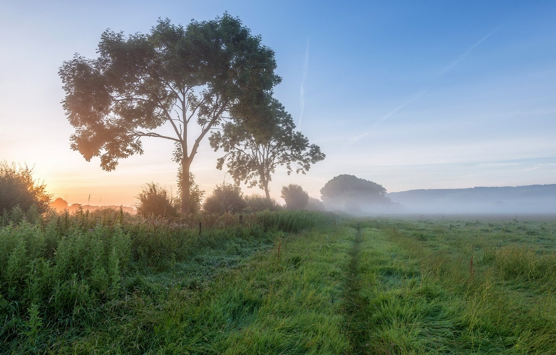Photo wallpaper field, landscape, fog, morning