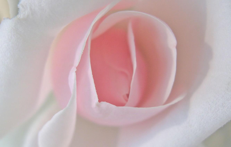 Photo wallpaper flower, pink