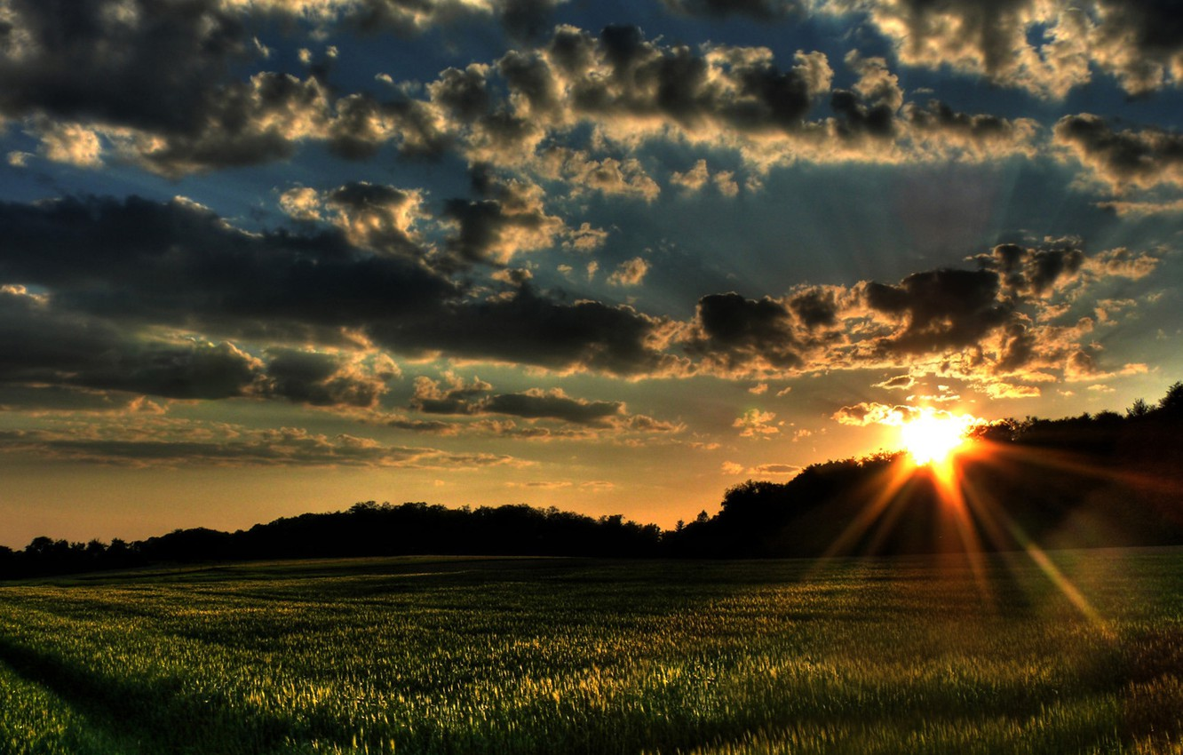 Photo wallpaper field, forest, summer, the sky, clouds, sunset, photo, dawn