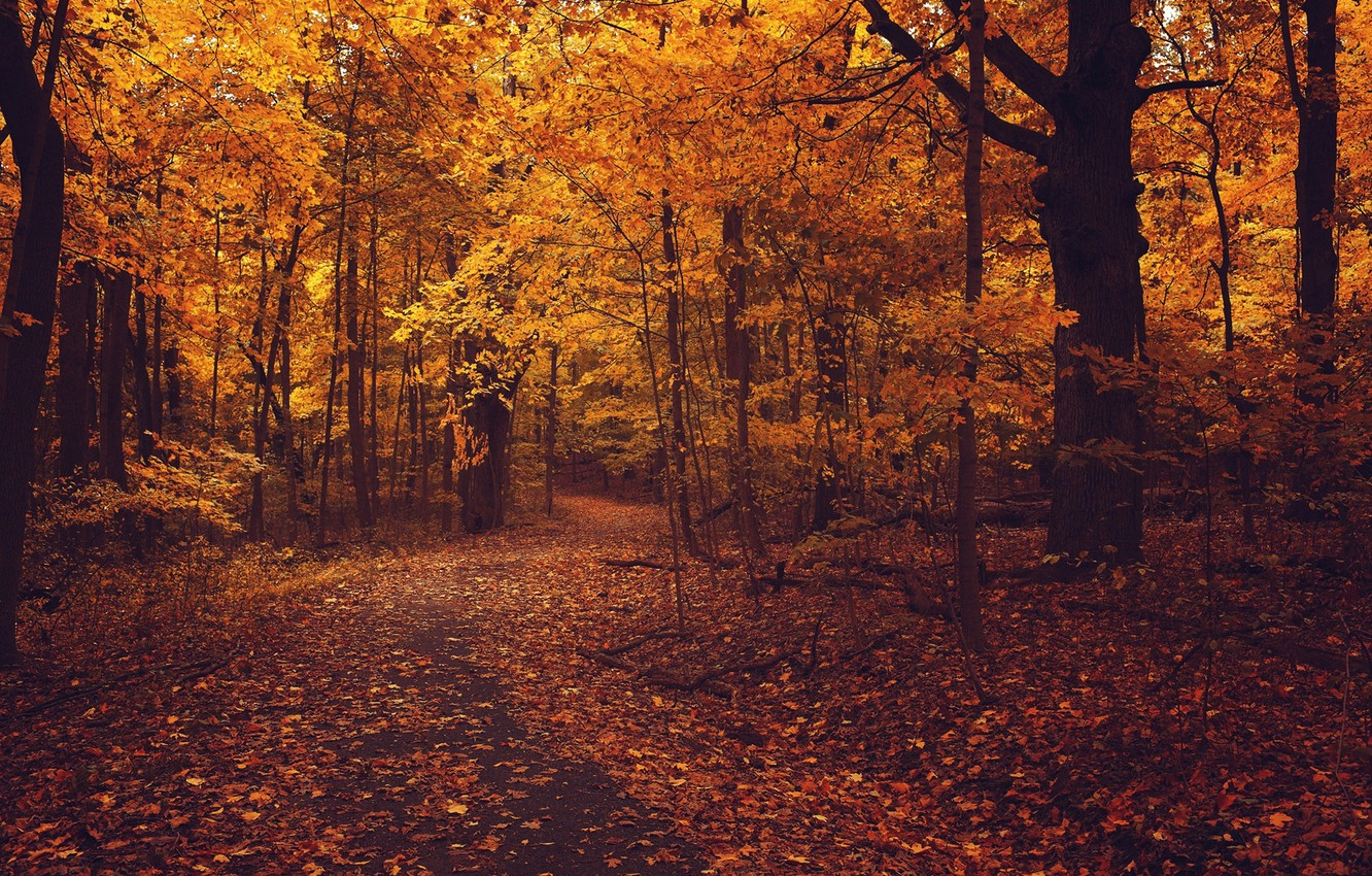 Photo wallpaper road, autumn, forest, asphalt, leaves, trees, branches, nature, foliage, yellow, orange