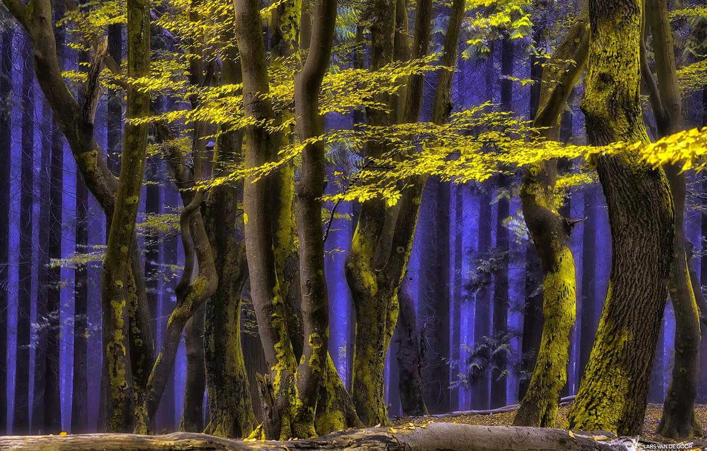 Photo wallpaper forest, trees, nature, haze, blue mist