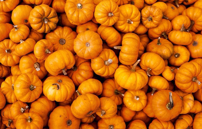 Photo wallpaper pumpkin, orange, a lot