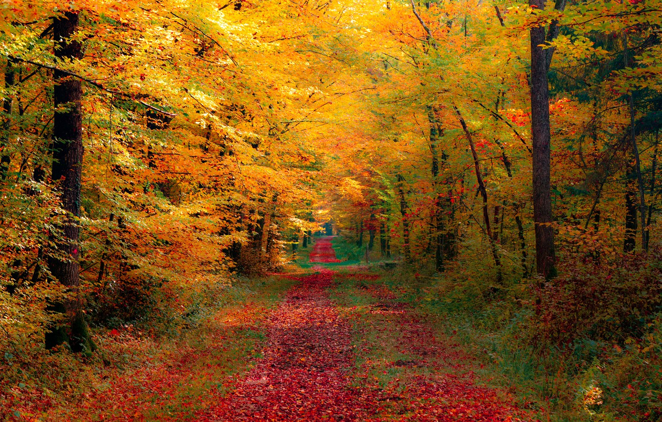Photo wallpaper road, autumn, forest, nature