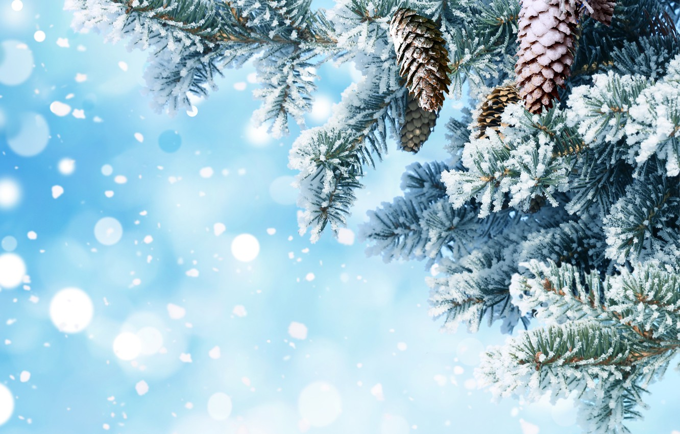 Photo wallpaper snow, needles, branches, background, tree, New year, bumps