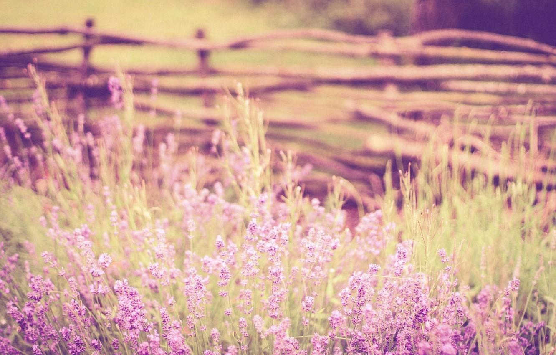 Photo wallpaper stems, the fence, bokeh, lavender