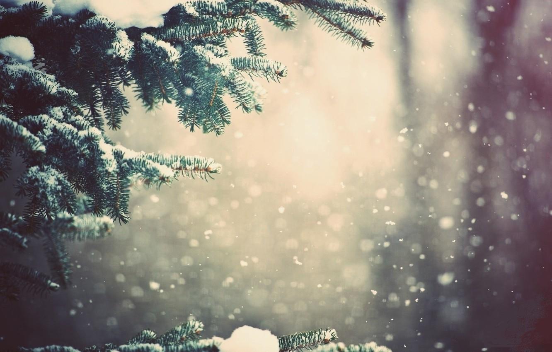 Photo wallpaper snow, tree, branch