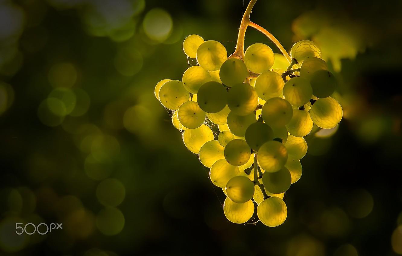 Photo wallpaper light, glare, berries, grapes, bokeh, Grona