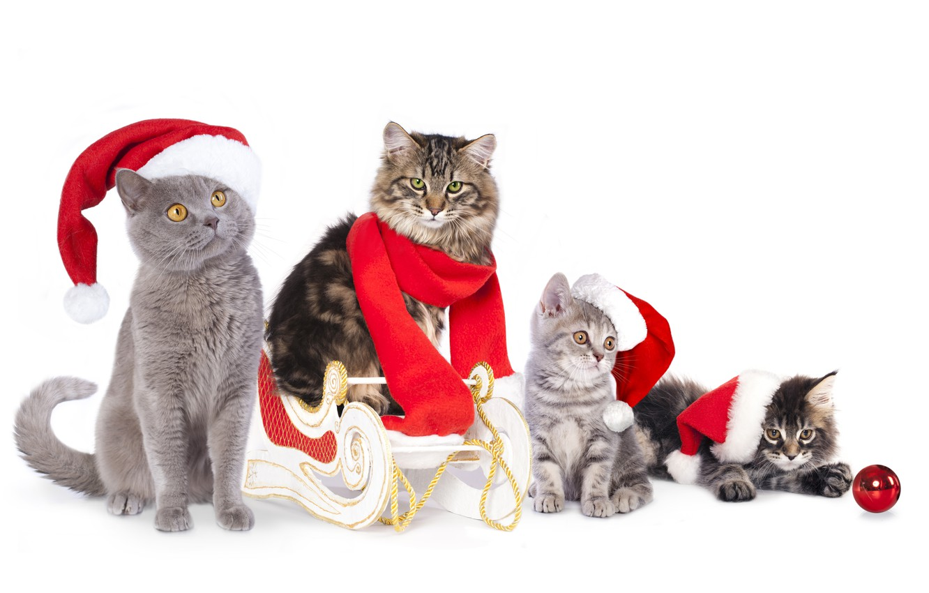 Photo wallpaper cats, cats, ball, scarf, kittens, sleigh, caps