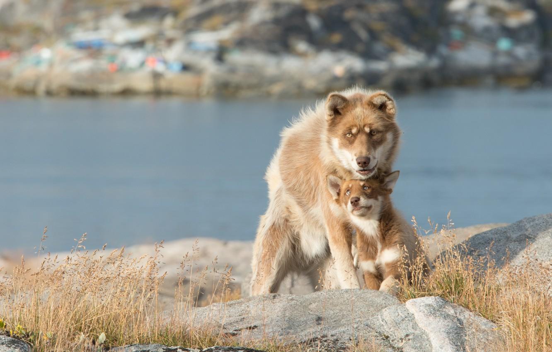 Photo wallpaper puppy, dog, lake, bokeh
