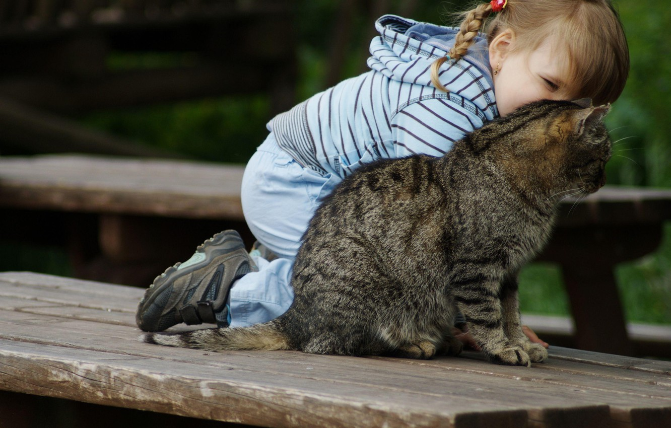 Photo wallpaper cat, cat, smile, child, girl, girl, smile, cat, pigtail, child, baby