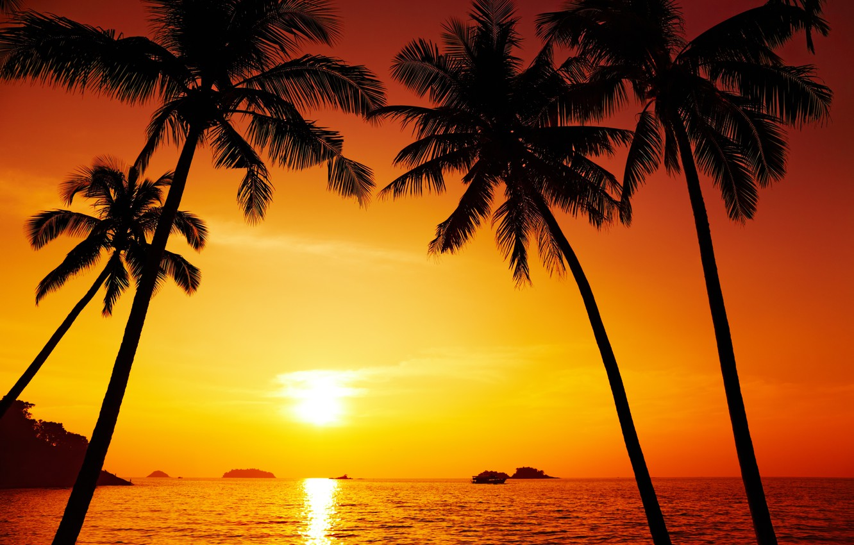Photo wallpaper landscape, nature, Palm trees, beautiful, Thailand, Thailand, pacific ocean, landscape, nature, beautiful, The Pacific ocean, …